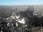 В Луганской области на фугасе подорвался украинский пограничник