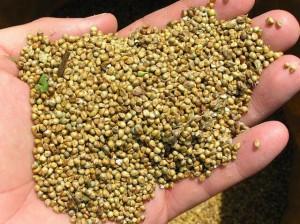 el-amaranto-el-mejor-alimento-origen-vegetal--L-0_eGyR